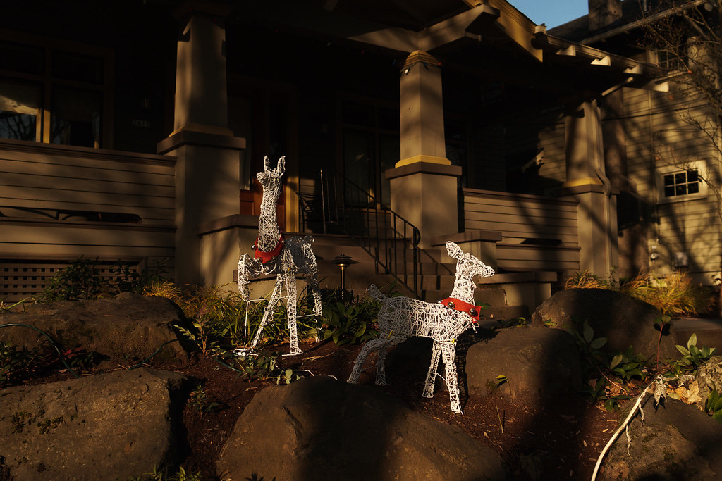Reindeer outside a house in the Irvington neighborhood of Portland, Oregon