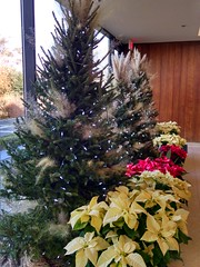 Admin Building/Visitors Center holiday decorations, US National Arboretum