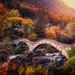 Ponte dei salti by Chrisnaton
