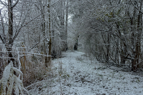 The winter path