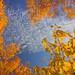 Autumn Skyscape