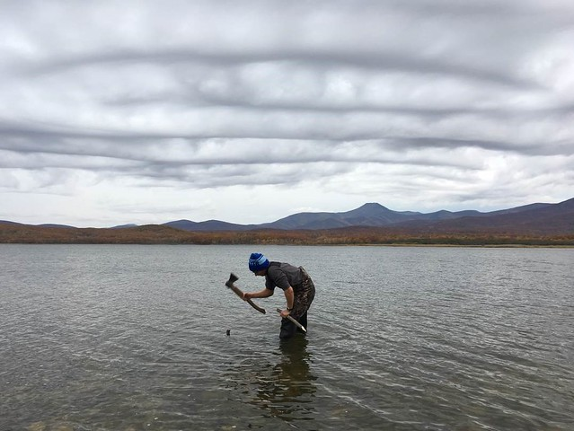 Figure 6. Konstantin Maslovskii, a graduate student, pounds a wooden stake into Lake Blagodatnoe to anchor a mist net for Dunlin captures. Photograph © Jonathan Slaght, WCS.