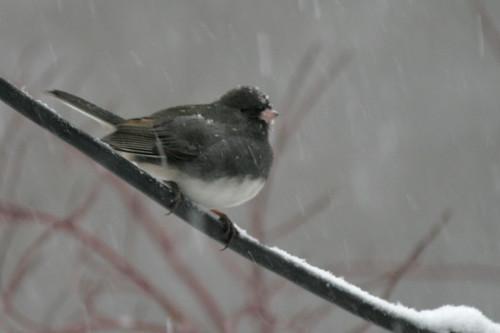 snow birds IMG_7271