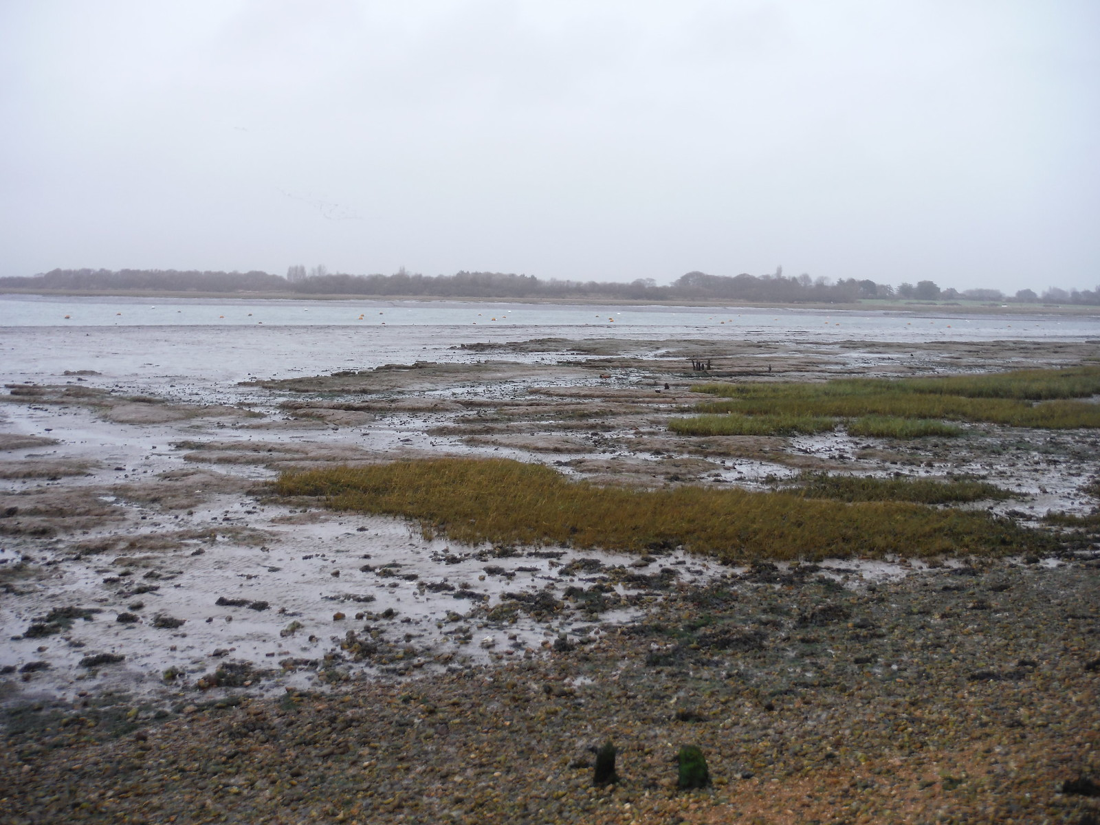 Chichester Channel at low tide SWC Walk 167 - New Lipchis Way: Chichester to West Wittering and East Head