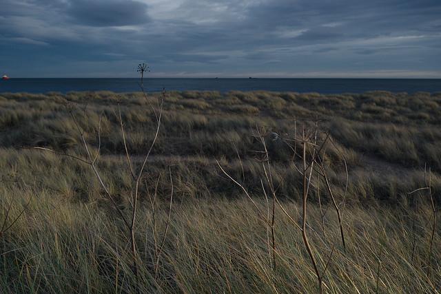 View from a Desire Path, Aberdeen, Dec 2017
