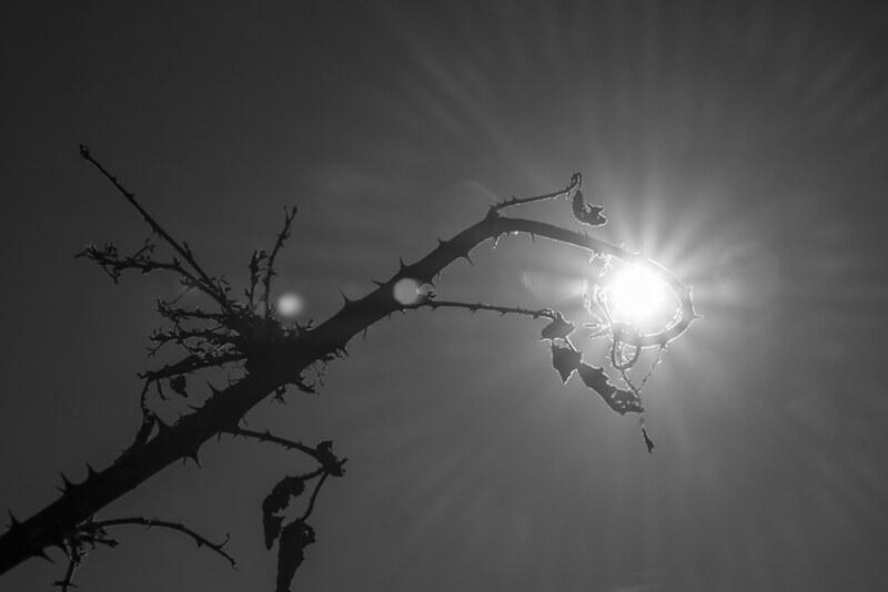 Sol atrapado