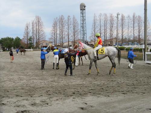 金沢競馬場で着外の馬たちが枠場に戻ってきた様子