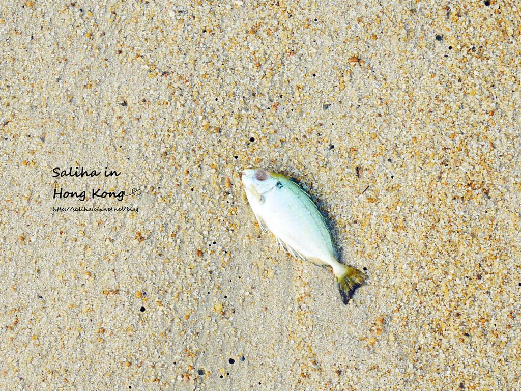 香港海邊景點一日遊淺水灣 (10)