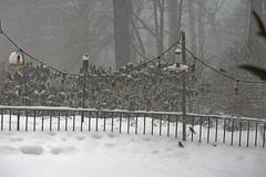 snow birds IMG_7278