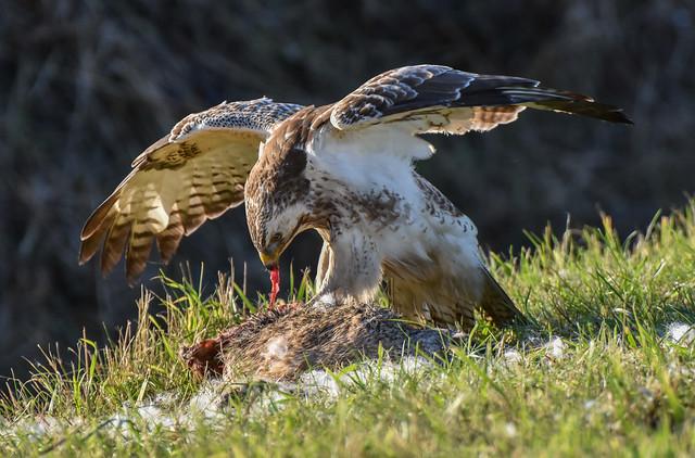 Saturday afternoon Wildlife