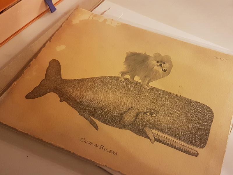 whale and pomeranian