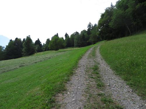20170614 04 345 Jakobus Wald Wiese Weg