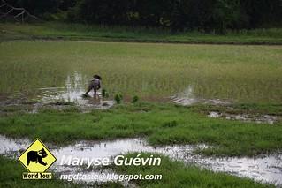 Rocher d'or, Kyaik-Hti-Yo Birmanie