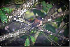 BIRD FROM SUTHERLIN.OREGON