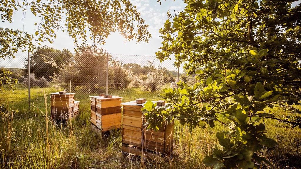 porsche-leipzig-turbienchen-honey (3)