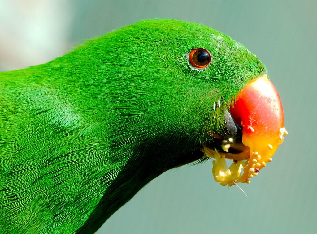Bird_33