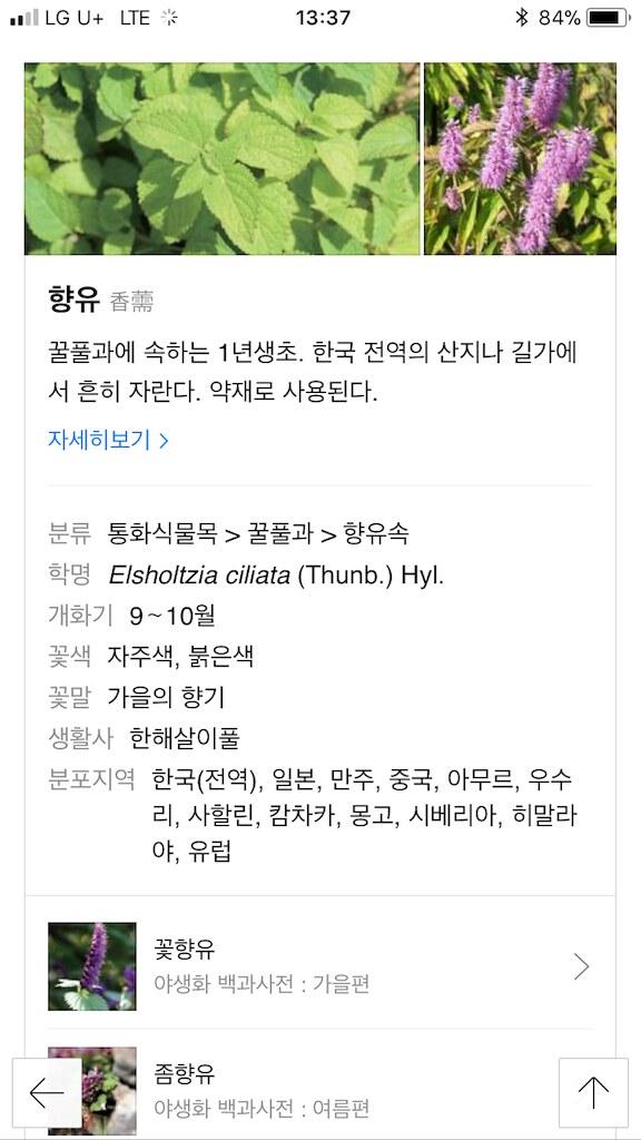 koreanapps-flowersearch9
