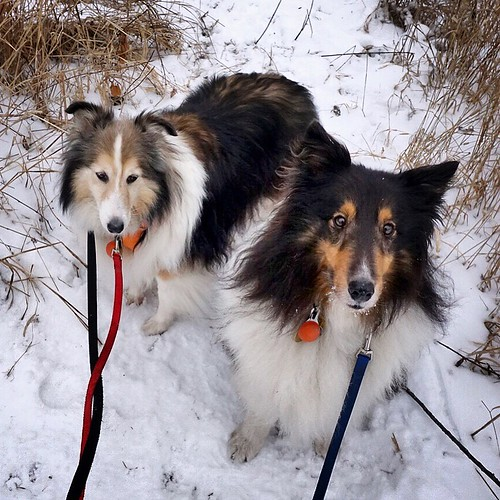 Jasper and Maggie in the snow