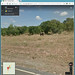Wild Elephant in Street View
