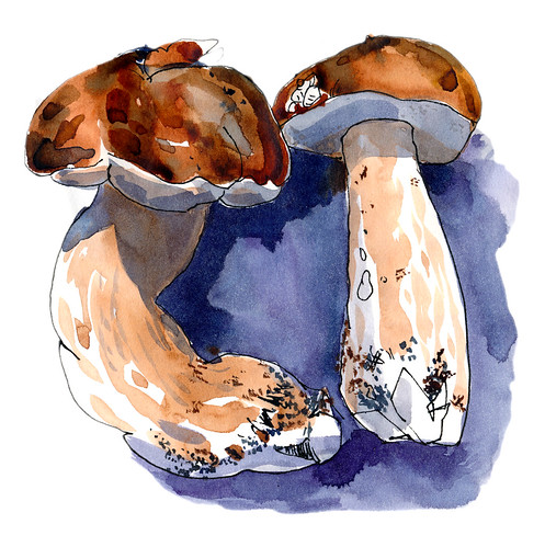 Sketchbook #110: Mushrooms