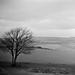 That Tree on Cissbury Ring