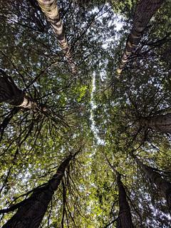 Tree Fissure