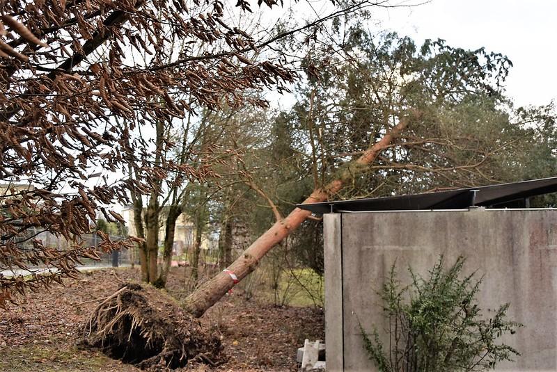 Hurricane Burglind 03.01 (7)