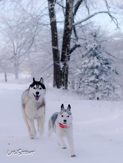 20180102 Snowdogs_252