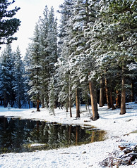 Whose Woods are These, Yosemite 2015