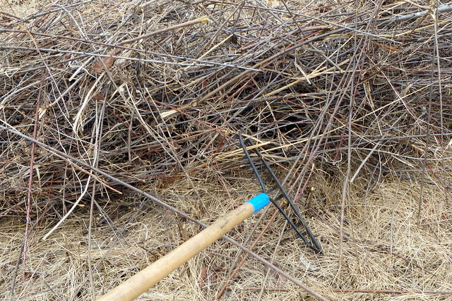 closeup of a pile of very straight sticks, with a garden rake resting in front