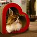 2.2 Gato del amor en Japón