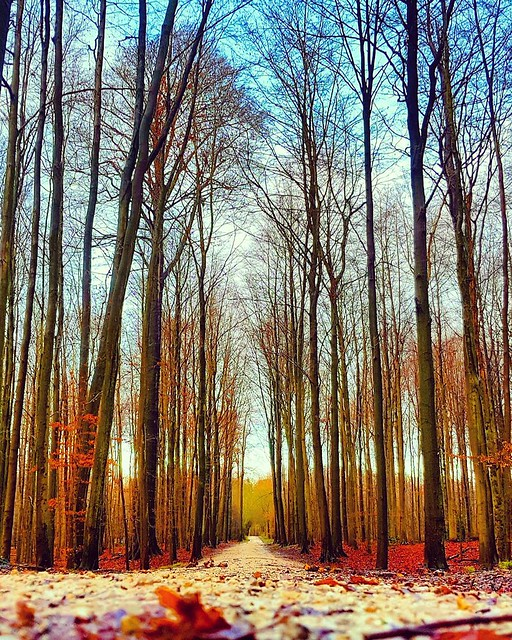 Forest Infinite #benheinephotography #forest #nature #photo #music #melody #foret #photography #path #chemin #trees #arbres