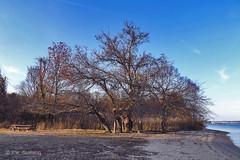 Tree at Dahlgren Wayside Park