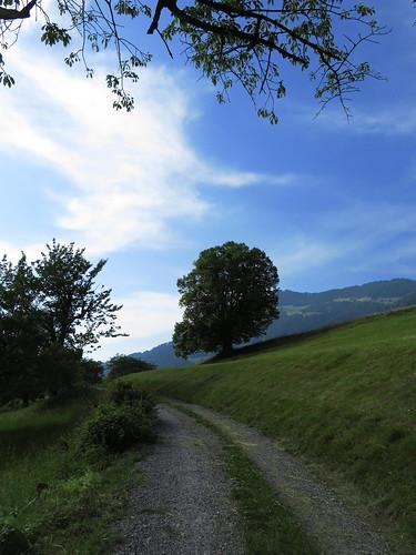 20170614 04 395 Jakobus Wolke Hügel Weg Wald Wiese