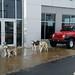 2017-12-26 Shorkey's Dog Visit