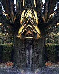 Das LIcht der Bäume