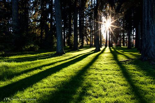 sunburst sunbeams forest trees shadows longshadows grass greengrass green riverbendhospital mckenzieriver