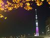 Photo:隅田公園より 東京スカイツリー(東京都墨田区・台東区) By たいぷらいた~