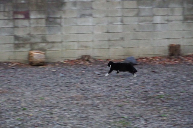 Today's Cat@2017-12-09