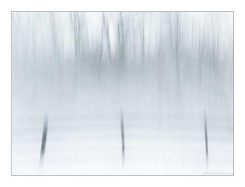 trees winter hff fence field icm blur texture lenabemanna