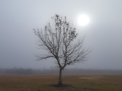 fog foggy florida