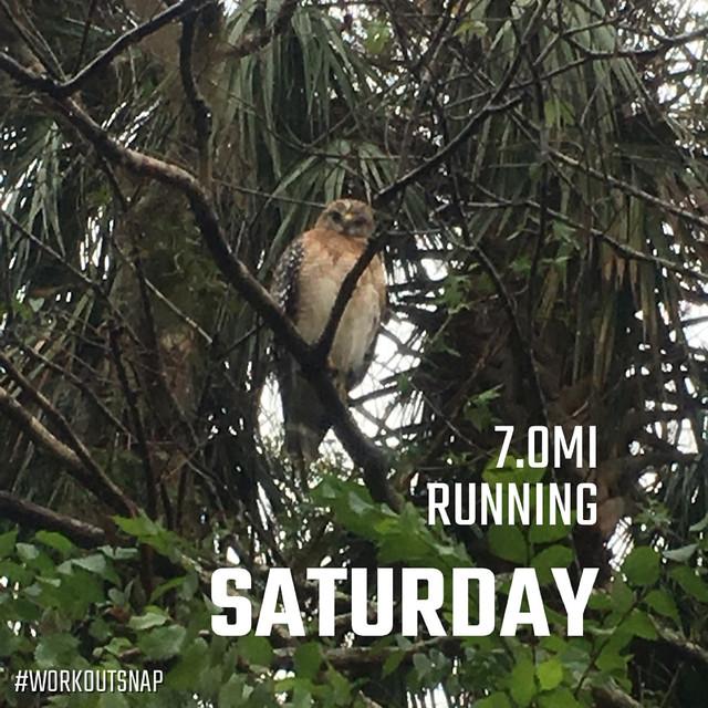 running and not birding