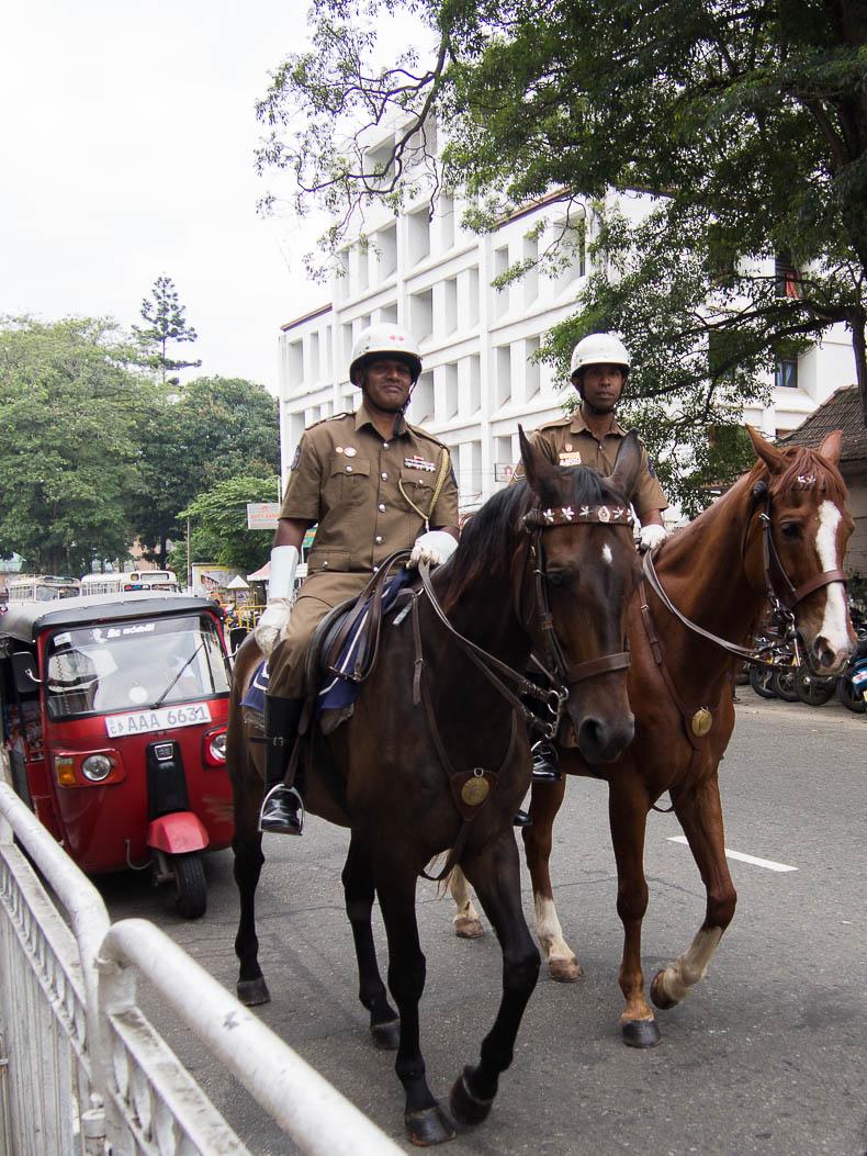 horse-police-kandy-sri-lanka