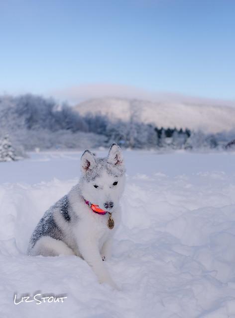 20180102 Snowdogs_249