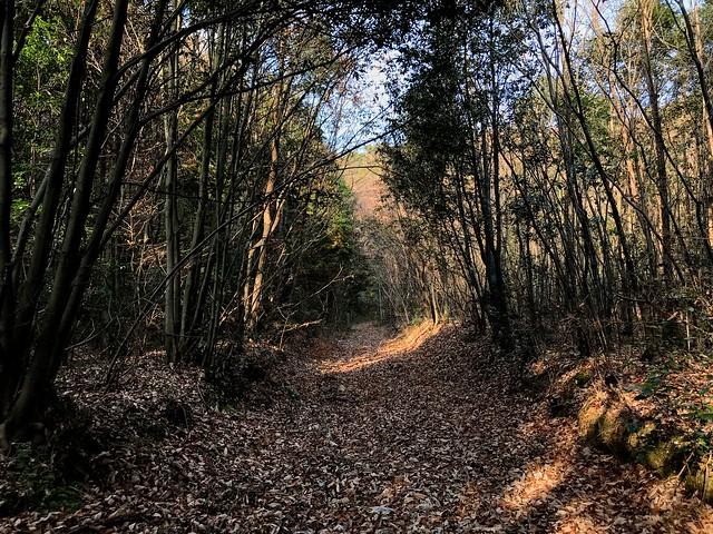 源太峰 登山道 北部西濃線 7番鉄塔への林道