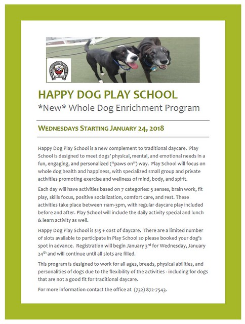 happy dog play school1