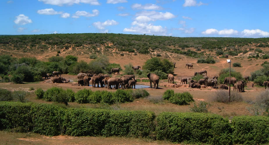 Addo Elephant National Park | Mooistestedentrips.nl