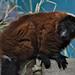 <p><a href=&quot;http://www.flickr.com/people/154677346@N07/&quot;>-Klaudi-</a> posted a photo:</p>&#xA;&#xA;<p><a href=&quot;http://www.flickr.com/photos/154677346@N07/24133874617/&quot; title=&quot;Nikon D500&quot;><img src=&quot;http://farm5.staticflickr.com/4686/24133874617_46a1668574_m.jpg&quot; width=&quot;240&quot; height=&quot;160&quot; alt=&quot;Nikon D500&quot; /></a></p>&#xA;&#xA;<p>Wilhelma</p>
