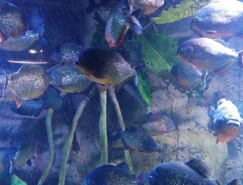 Quiet glitter #toronto #ripleysaquarium #aquarium #fish #latergram