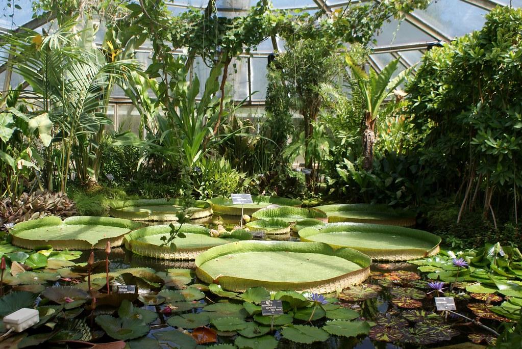 Parc de la t te d 39 or lyon zoo lac et jardin botanique for Le jardin 69008 lyon